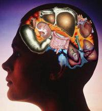 Аллегория: органы в голове